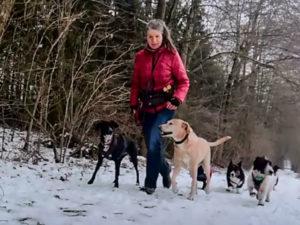 Dogwalking, Hundebetreuung, Gassi gehen, Gassi Service, spazieren gehen, Hund, Kassel, Kassel, Nordhessen, Vellmar, Göttingen, Baunatal, Schauenburg, Habichtswald, Zierenberg