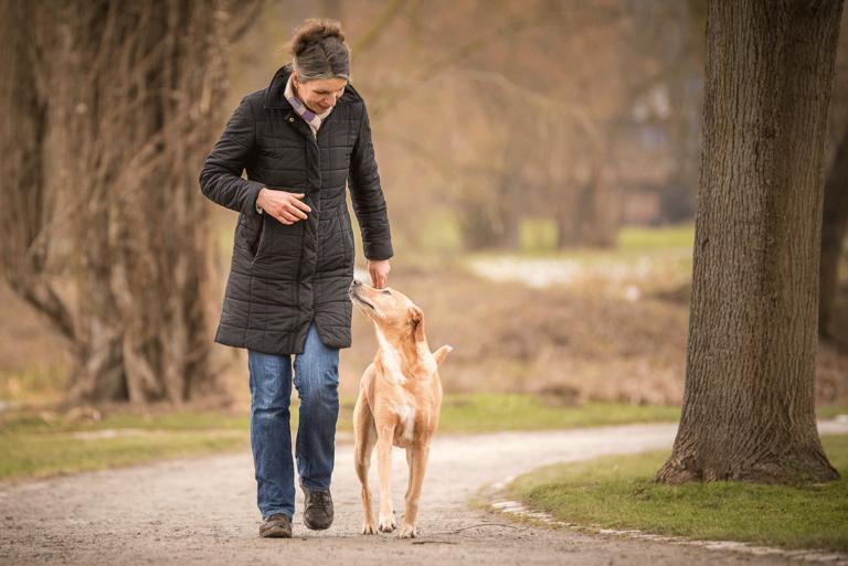 Dogwalking, Hundebetreuung, Gassi gehen, Gassi Service, spazieren gehen, Hund, Kassel, Urlaubspension, Hundepension, Ferienbetreuung, übernachten, Nordhessen, 7Dogs