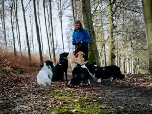 Dogwalking, Hundebetreuung, Gassi gehen, Gassi Service, Hundepension, 7Dogs, Hundebetreuung, , Kassel, Nordhessen, Göttingen, Baunatal, Schauenburg, Habichtswald, Zierenberg